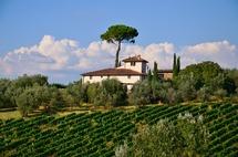 Vinařské oblasti by mohly mít rekordní turistickou sezonu, naznačují to čísla ze slevových portálů